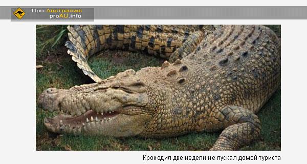 Крокодил две недели не пускал домой туриста