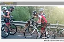 Трогательное фото с коалой