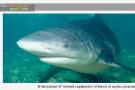 В Австралии 47-летний серфингист отбился от акулы кулаками
