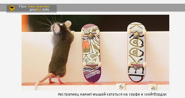 Австралиец научил мышей кататься на серфе и скейтбордах