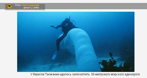 У берегов Тасмании удалось запечатлеть 30-метрового морского единорога.Видео
