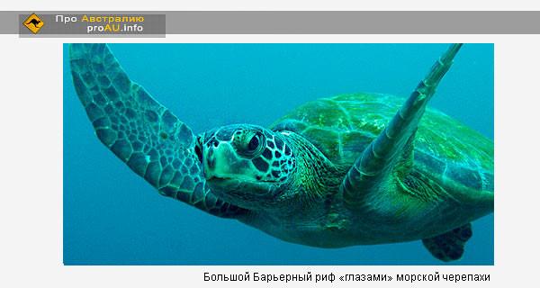 Большой Барьерный риф «глазами» морской черепахи . Видео
