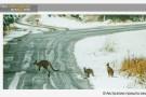 В Австралию пришла настоящая зима со снегом.