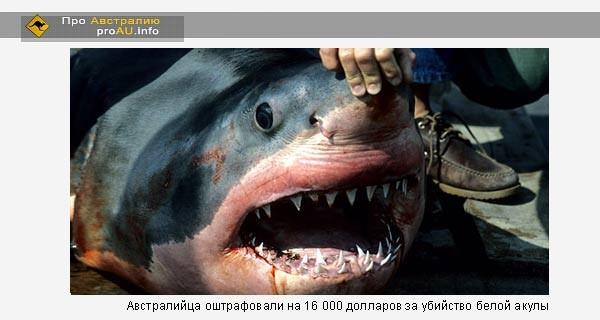 Австралийца оштрафовали на 16 000 долларов за убийство белой акулы
