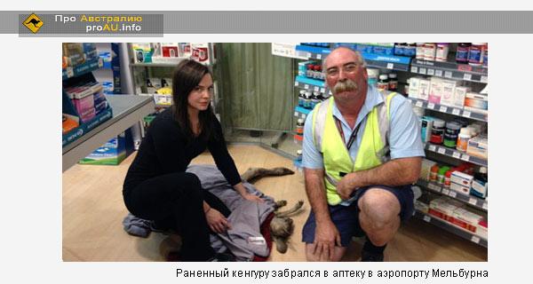 Раненный кенгуру забралcя в аптеку в аэропорту Мельбурна