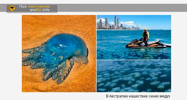 Синие медузы атаковали побережье Голд-Коста/Gold Coast в Австралии
