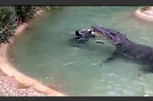 Австралийский крокодил украл газонокосилку