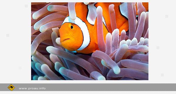 В Австралии создадут крупнейший в мире морской заповедник