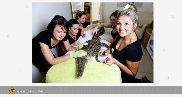 Маникюр и массаж в австралийском салоне красоты для самки крокодила.