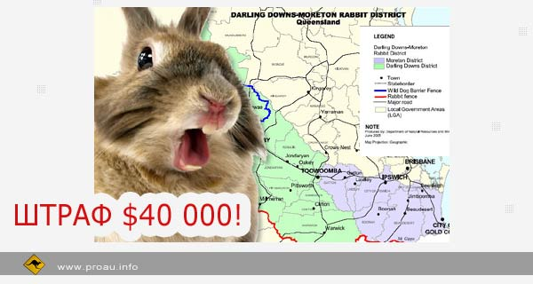 Штраф 40 000 дол. за содержание кролика
