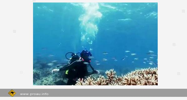 Google и Sony Ericsson. Проверка связи на Большом Барьерном рифе