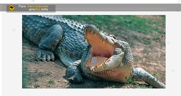 Аборигены поддерживают желание правительства Австралии разрешить охоту на крокодилов