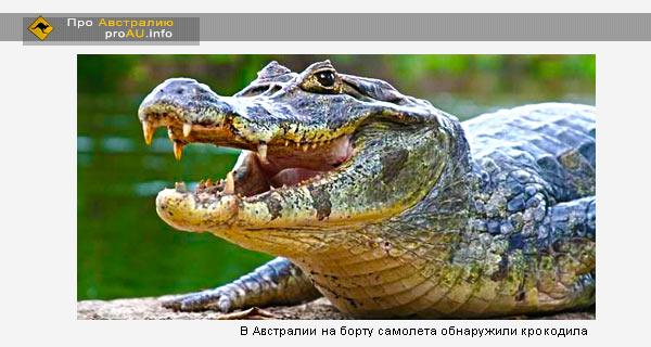 Крокодил разгуливал на борту самолета