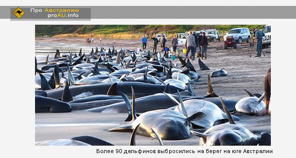 Более 90 дельфинов выбросились на берег на юге Австралии