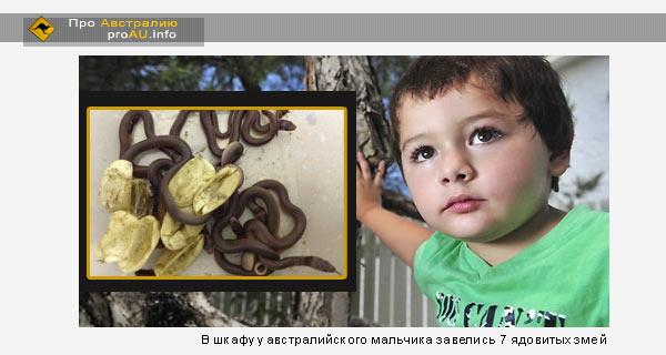 В шкафу у австралийского мальчика завелись 7 ядовитых змей