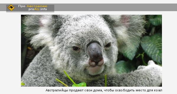 Австралийцы продают свои дома, чтобы освободить место для коал