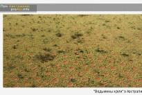 Ученые объяснили причину возникновения «ведьминых кругов» в Австралии и Намибии