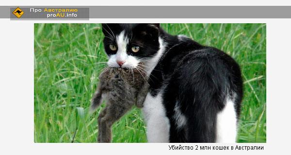 Убийство 2 млн кошек в Австралии — живодерство или вынужденная мера