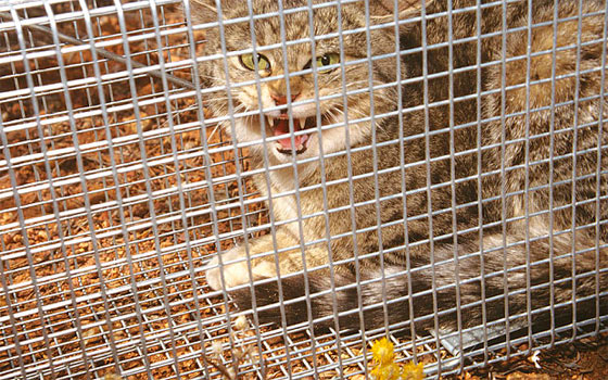 Убийство 2 млн кошек в Австралии