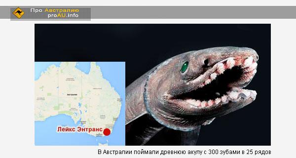 В Австралии поймали древнюю акулу с 300 зубами в 25 рядов