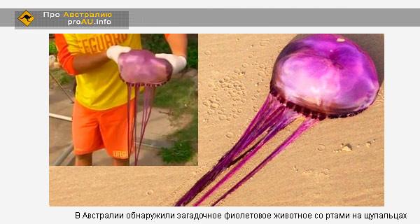 В Австралии обнаружили загадочное фиолетовое животное со ртами на щупальцах