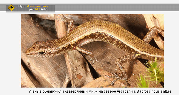 Ящерицы, названные Saproscincus saltus, достигают в длину 4,2 сантиметра.
