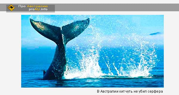 В Австралии кит чуть не убил серфера